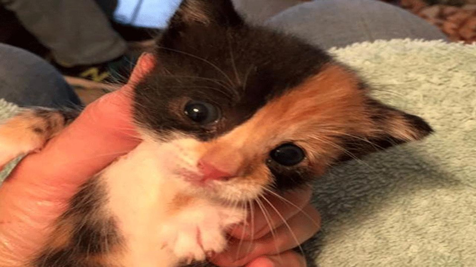 Firefighters Rescue Tiny Kitten Abandoned In A Beg!
