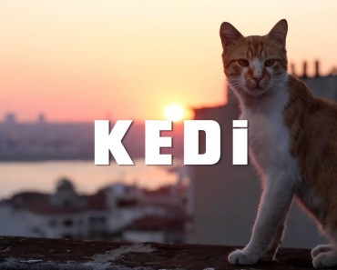 A Documentary About What It's Like  To Be A Cat In Istanbul!