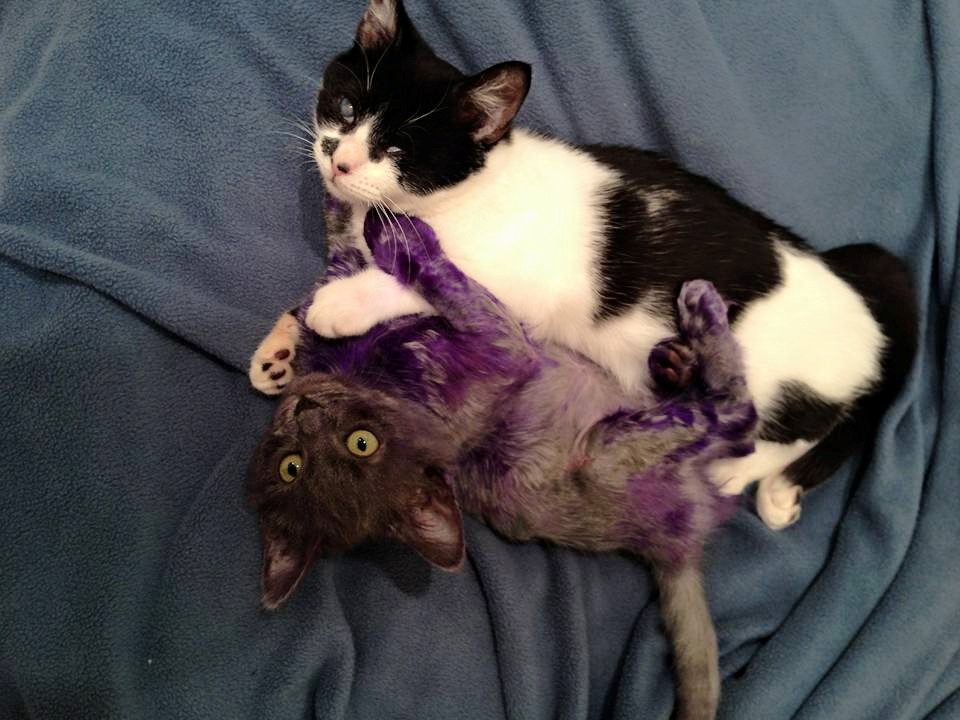Smurf and Wanda