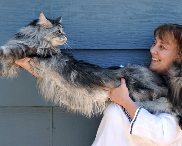 The Longest Cat Ever!