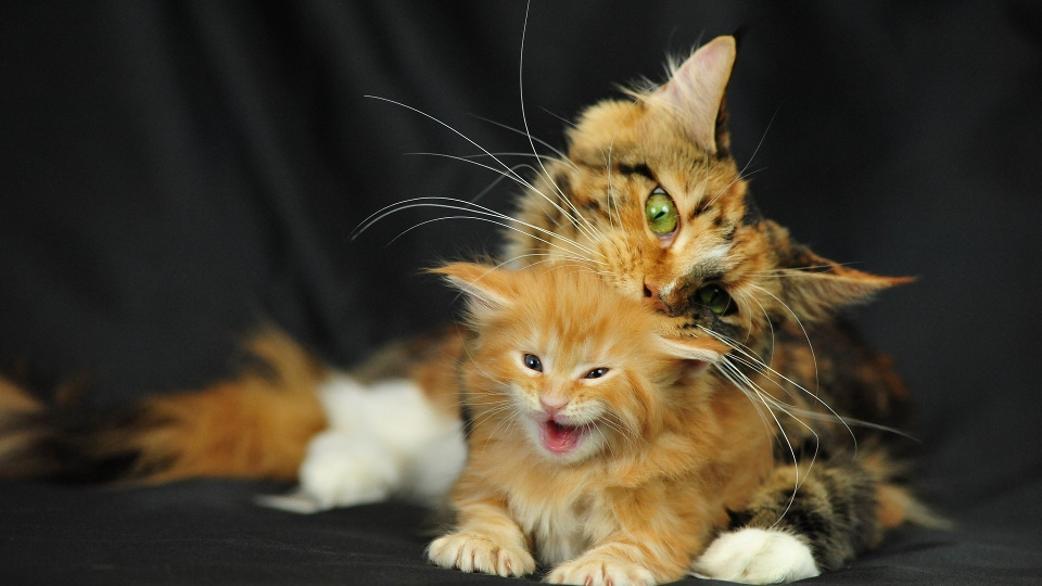 10 Adorable Photos Of Mom Cats And Their Kittens!