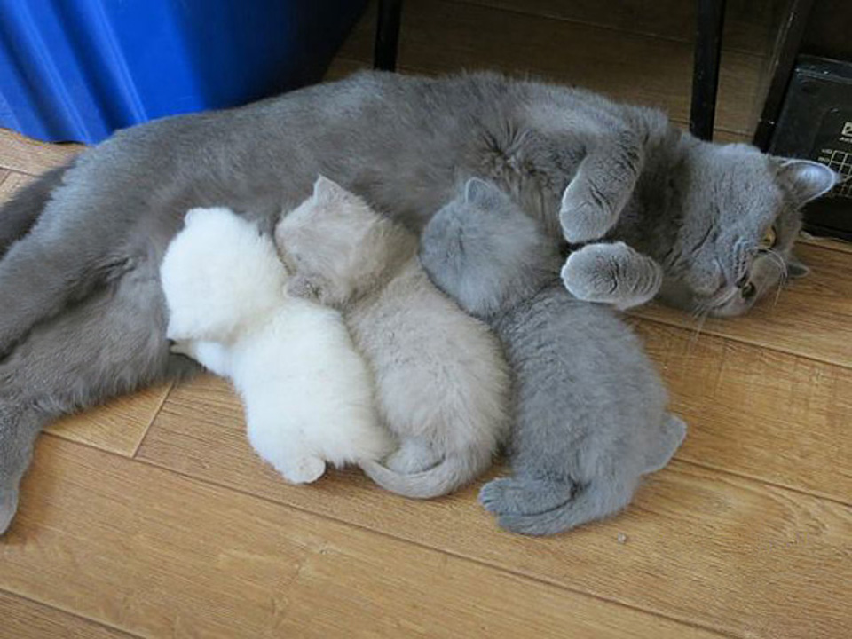 Mother with 3 kittens