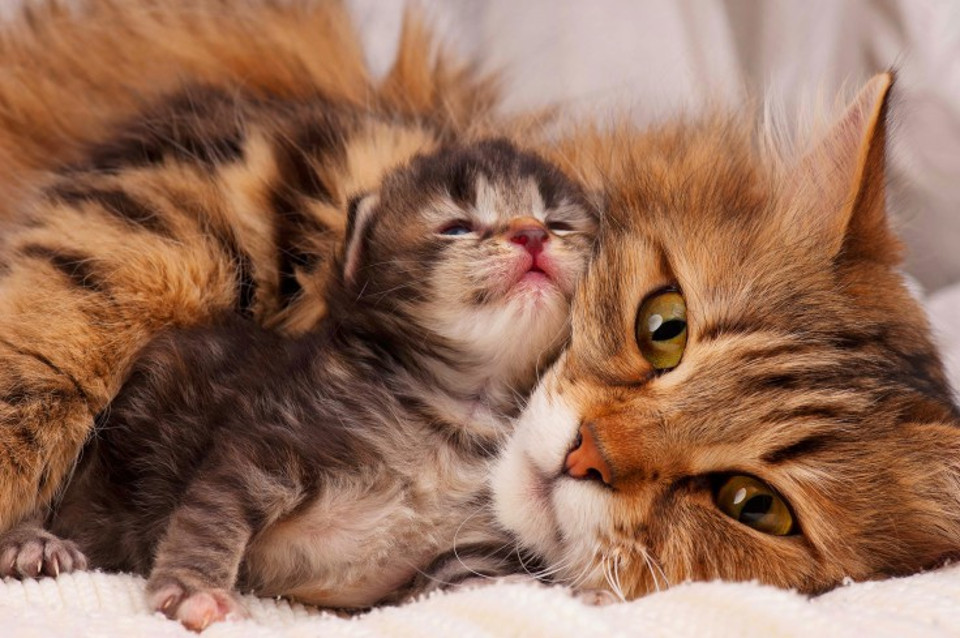 Proud cat mother