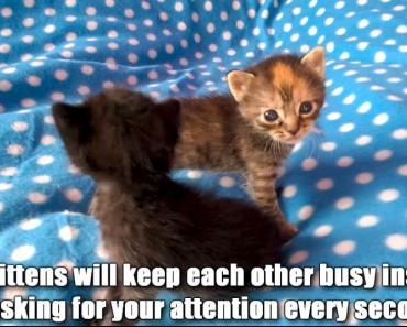 5 Reasons To Adopt Two Kittens In Stead Of Just One