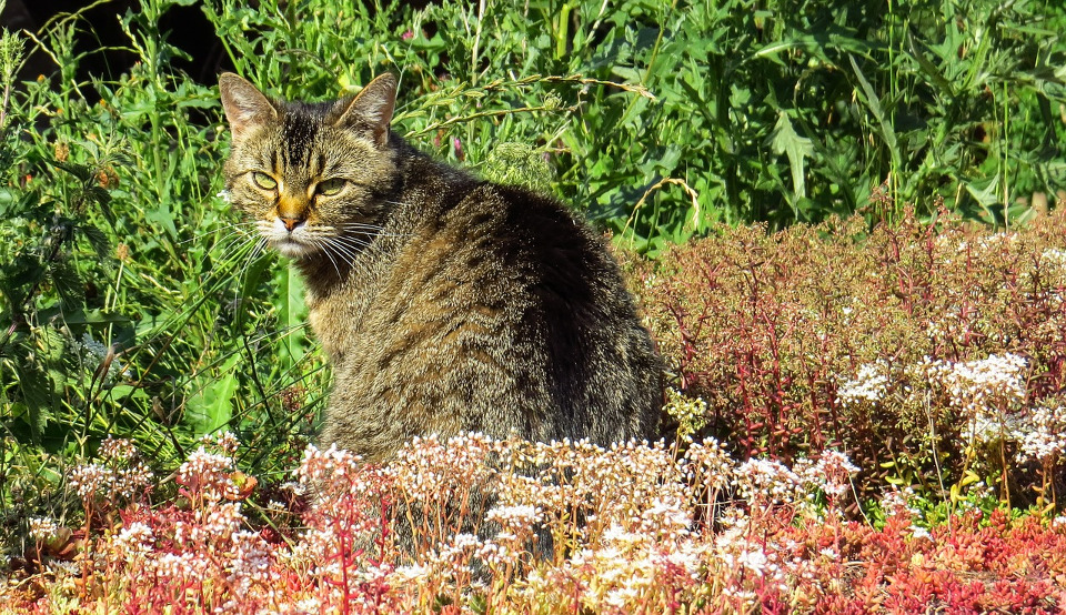 6 Spring Plants That Can Be Toxic To Cats!