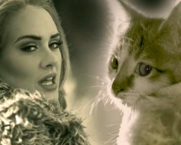 Adele's Hello Parody With Kittens!