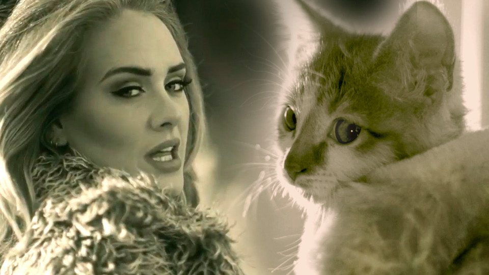 Adele's Hello Parody With Kittens!