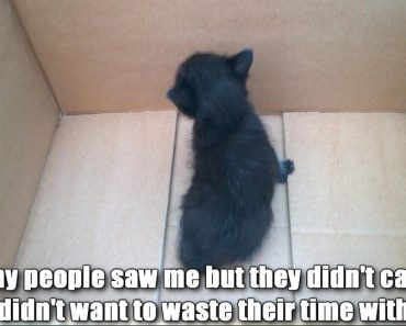 A Black Kitten Was Found Abandoned In a Box. A Few Years Later…
