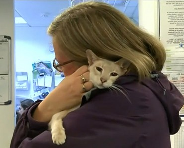 Cat Sent By Mail By Mistake Survives 8 Days In A Box
