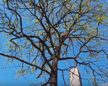 Man Risks His Life To Save A Cat Stuck In a Tree!