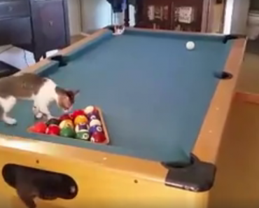 The Purrfect Playing Place: A Pool Table!
