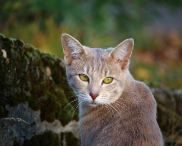 On Earth Day Celebrate The Role Of Cats In The Environment!