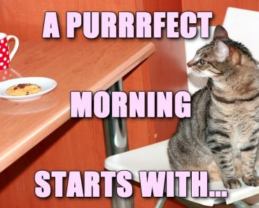 How to start a purrrfect day!