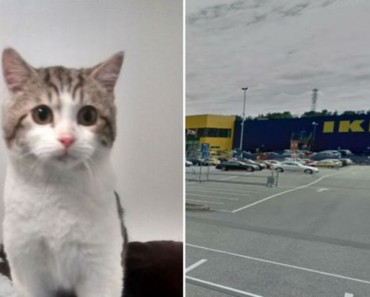 Kitten Abandoned At Ikea Car Park Finds A New Home