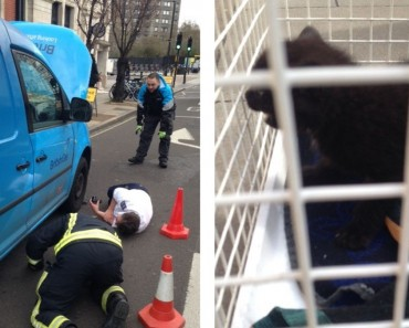 Kitten Rescued From Van Engine In London