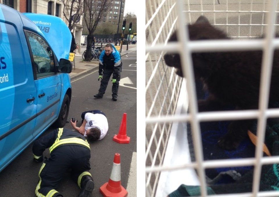 Kitten Rescued From Van Engine In London