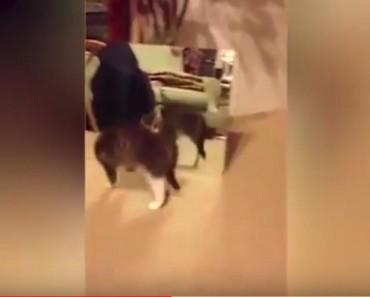 Cute Alert – Kitten Sees Herself In The Mirror