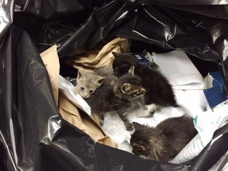 Sanitation Workers Save Kittens From Trash!