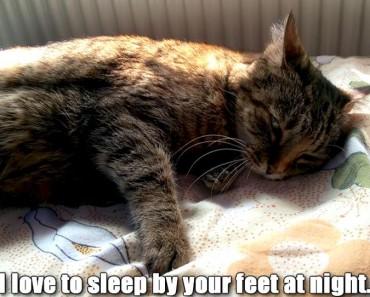 Senior Cats Deserve A Good Life Too