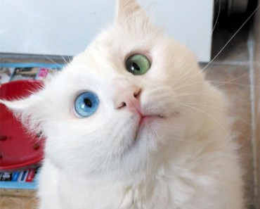 The 'World's Most Beautiful Eyes'!