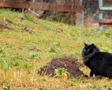 Saving Cats From Death Row. The Farm Livin' Program