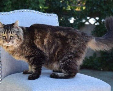 The Oldest Cat Living!