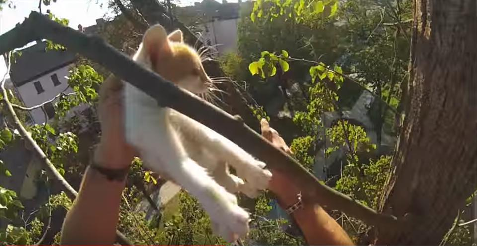 Young Man Climbs Up A Huge Tree To Rescue Two Kittens