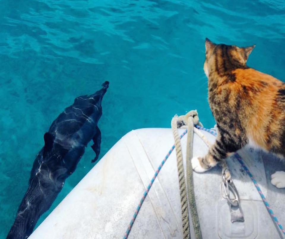 cat sailing