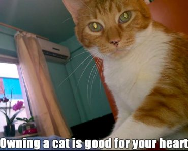 7 Scientific Benefits Of Being A Cat Owner!