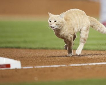 A Cat Interrupted Angels Baseball Game!