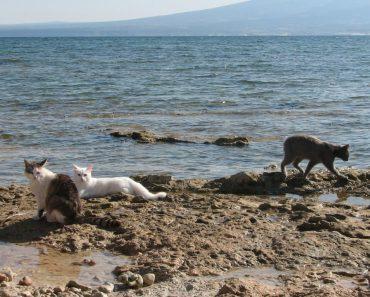 A Colony Of Cats On The Beach In Sardinia, Italy