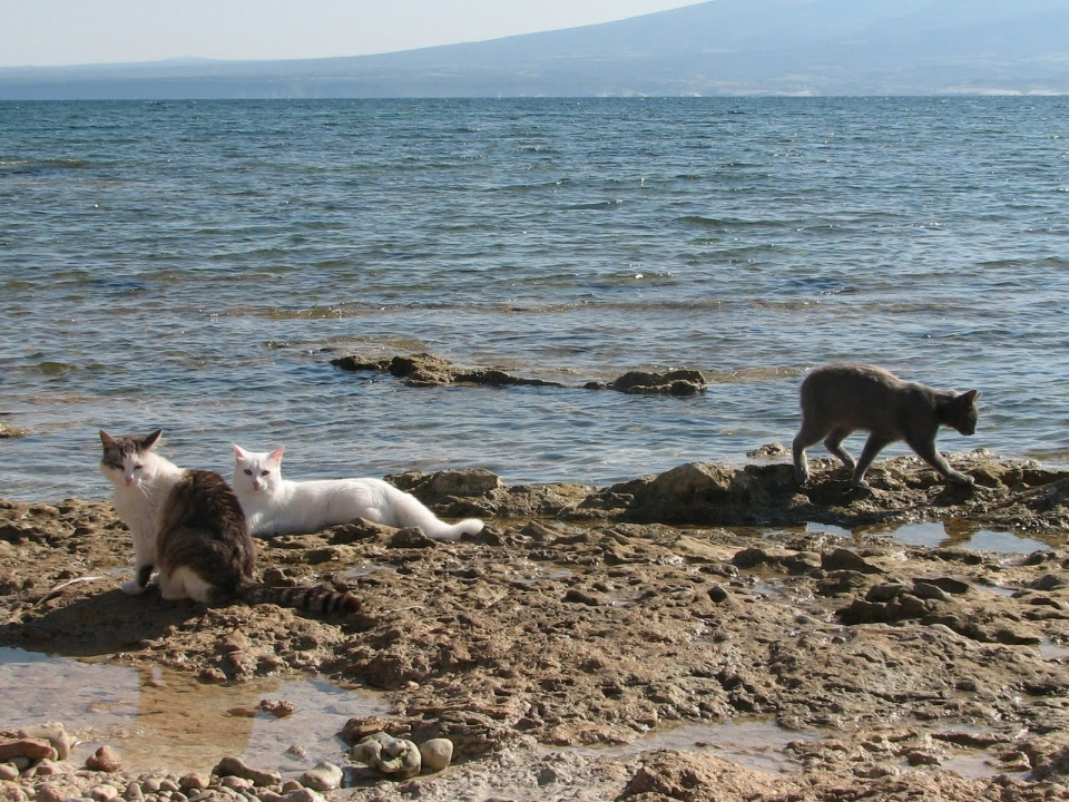 A Colony Of Cats On The Beach In Sardinia, Italy