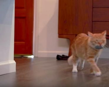 An Amazing Example Of Fostering And Helping Cats In Need
