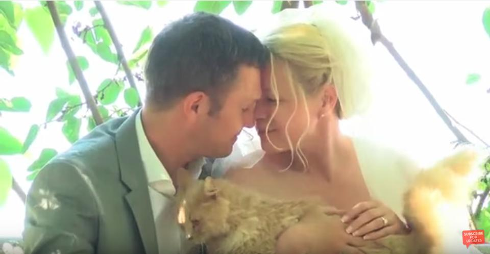 Canadian Couple Get Married At a Cat Sanctuary