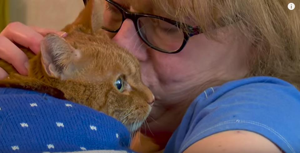 Hero Cat Saved His Owner In A Fire