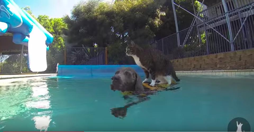 funny cat flying