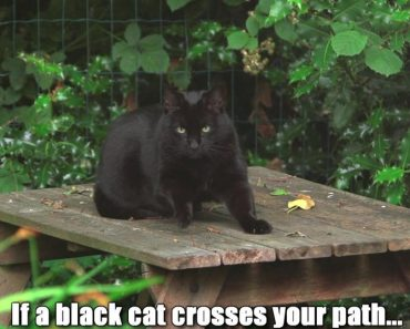 If A Black Cats Crosses Your Path…