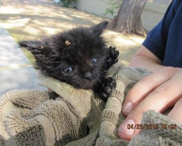 Tiny Kitten Rescued From A Manhole
