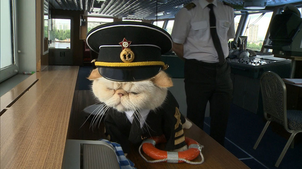 The Cutest Feline Sailors!