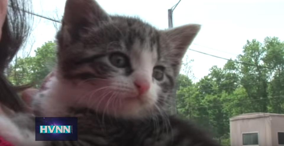Six Kittens Rescued From A Roll Off Container!