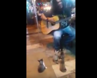 Street Singer Had The Cutest Audience