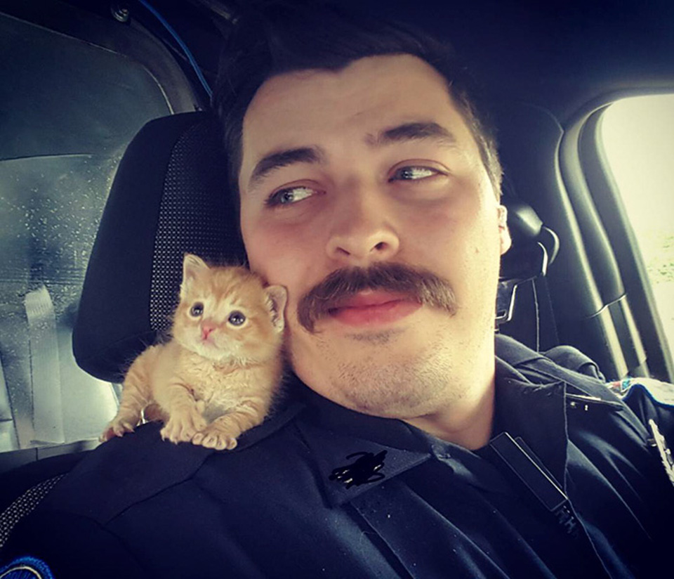 The Purrfect Partner For A Cop!