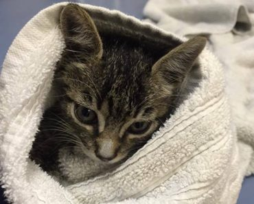 Two Kittens Rescued In Fort Lauderdale After Getting Stuck Inside  A Car and A Truck.