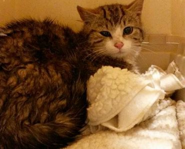 A Cat That Traveled More Than 100 Nautical Miles Needs Help To Get Home!