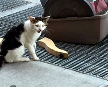 Cat Abandoned On The Street With His Litterbox And Cat Supplies.