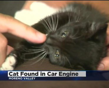 Kitten Rescued After He Was Found Near Truck Engine!