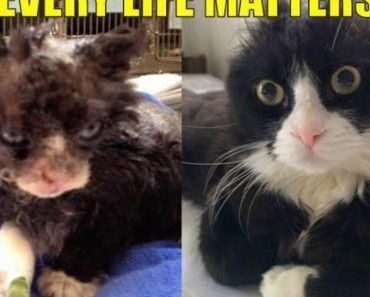 Cat Who Survived Fire Is Now Helping Other Injured Cats
