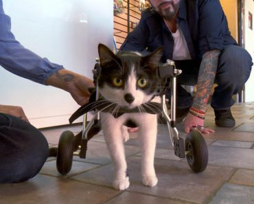 Despite Suffering From Paralysis, Ziggy Has A Lot Of Determination