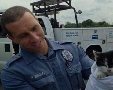 Kitten Rescued After He Was Tossed From Moving Car!