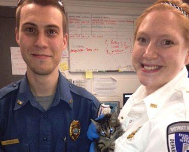 Kitten Rescued From Metro Tracks
